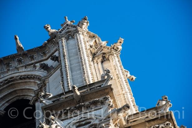 Notredame (4)